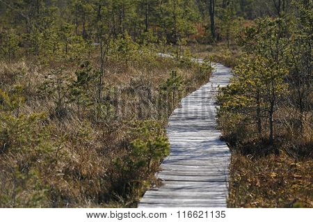 Wooden board pathway