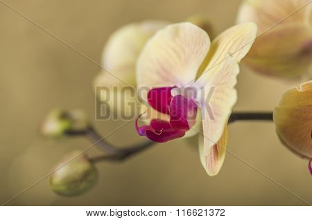 Detail Of Yellow Orchid Flower,