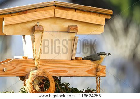 Selective focus of Eurasian wood Nuthatch bird (Sitta europaea) with sunflower seed in its beak on a wooden bird house