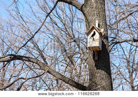 Wooden Birdhouse Hanging From A Tree In Spring Day