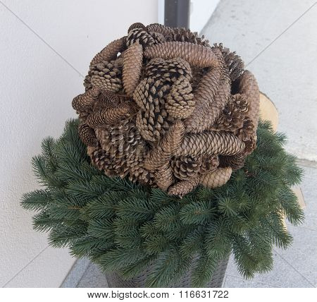 Composition Of Pine And Fir Cones