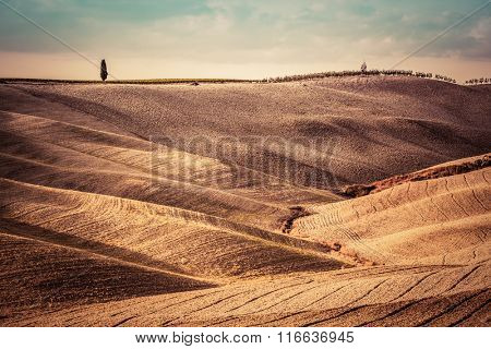 Tuscany fields autumn landscape, panorama, Italy. Harvest season makes the countryside golden hills and valleys nostalgic and picturesque. Lonely cypress tree