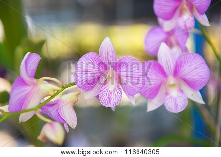 Beautiful pink orchids flower tree.
