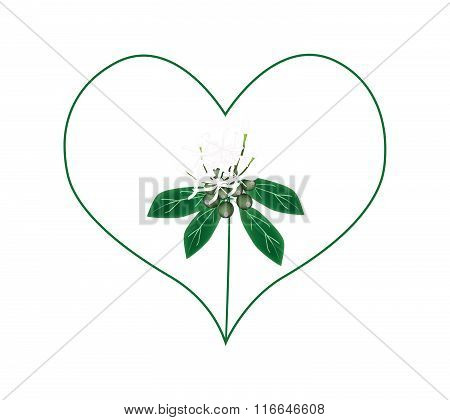 White Ixora Flowers In A Heart Shape