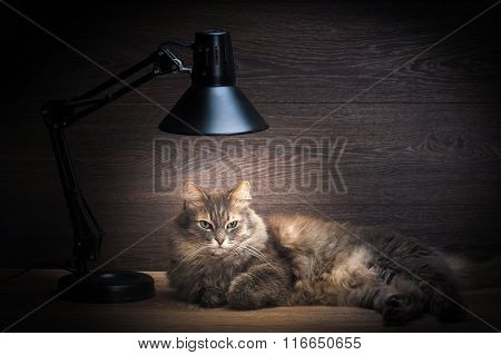 The cat is on the table under the electric lamp