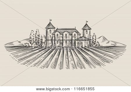 vineyard. hand-drawn sketch. vector illustration