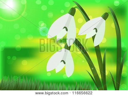 Beautiful white snowdrops on a green lighting background