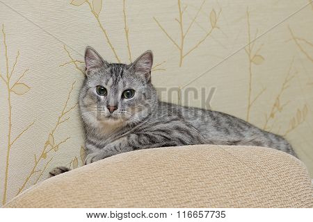 Sleeping cat on blurry carpet background, funny sleeping cat on hot summer day, humorous photo of sl