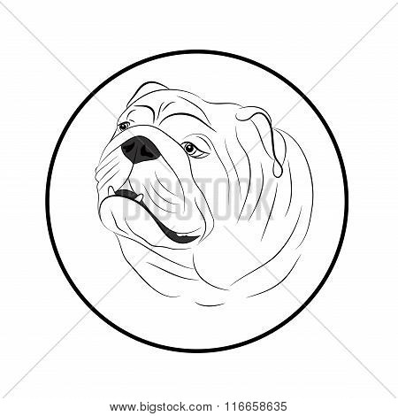 Portrait of an old English bulldog painted black lines
