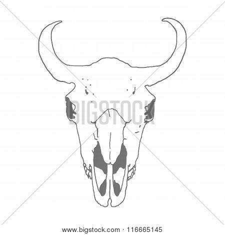 Skull of a bison