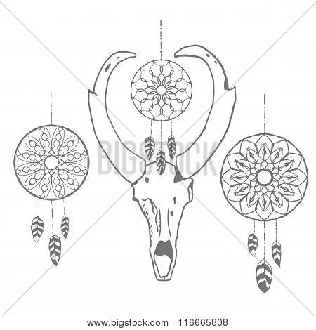 Skull of an antelope with dream catchers