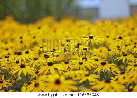 Bloomed Flowers