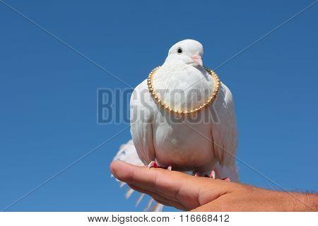 White Dove.