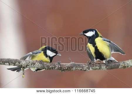 two Tits on the branch