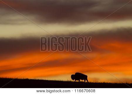 bison silhouette with Kansas sunrise
