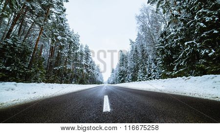 Winter country road with fir forest on the side