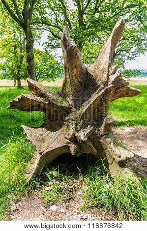 Tree Roots, Root Of Fallen Tree.