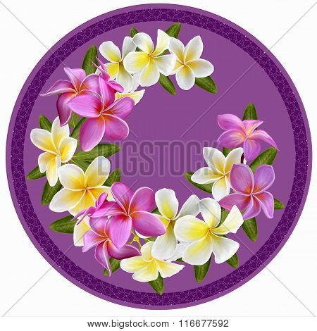 Pink And White Plumeria. Tropical Exotic Flowers.flowers In A Circle. Round Form. Round Floral Backg