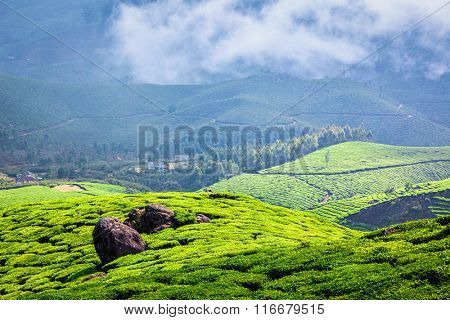 Kerala India travel background - green tea plantations in Munnar with low clouds, Kerala, India - tourist attraction