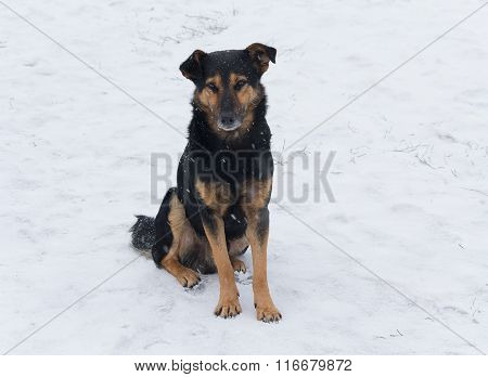 Lonely Homeless Dog Sitting In The Snow. Animals
