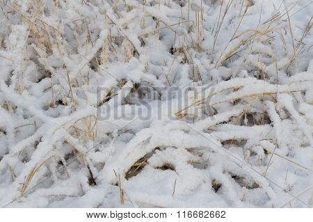 Fresh and fluffy snow on dry grass