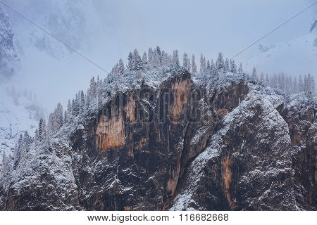 Snowy trees under first snow in Italian Dolomites