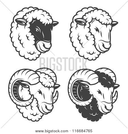 Vector illustration of 4 sheeps and rams heads.