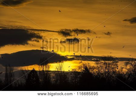 Birds Flying In Sunset