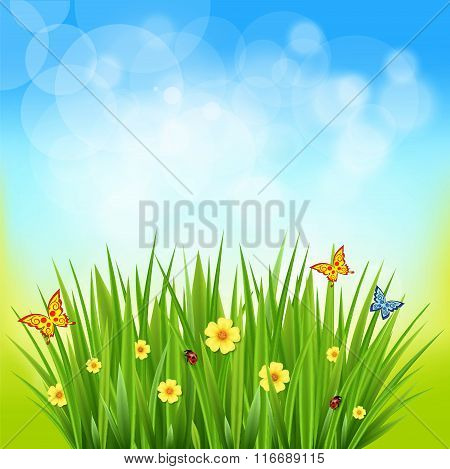 Green Grass On A Blurred Background Of Nature