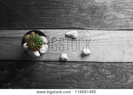 Cactus On A Monochrome Background