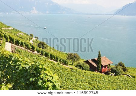 Vineyards in Lavaux against Geneva lake, Switzerland