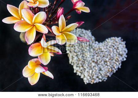Beautiful Frangipani Flowers Bunch On Dark Background And Blurred Heart Shape Pebble