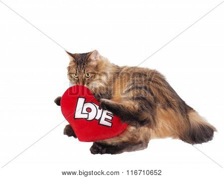 Domestic Cat With Soft Red Heart. Valentin Theme