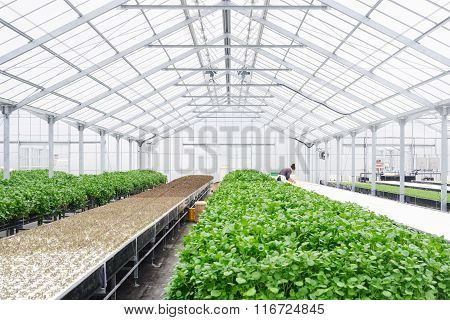 Greenhouse Farming Organic Vegetables Agriculture Technology