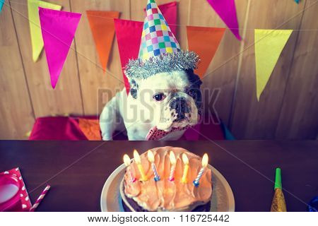 Dogs On Birthday Party