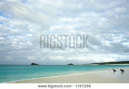 Isla Espanola – Galapagos Islands