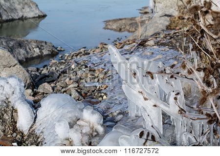 Frozen bushes with ice in the winter lake