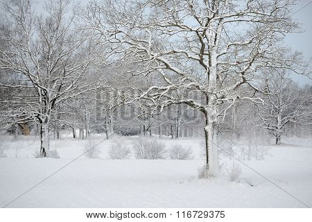Winter Wonderland In Snow Covered Forest And Rural Area. Latvia
