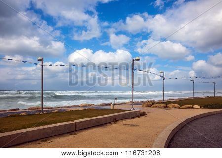 The first day of January. The famous promenade of Tel Aviv in stormy weather. The cat hid from the strong sea wind