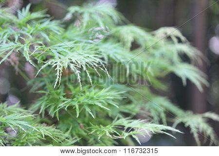 Delicate Leaf Background