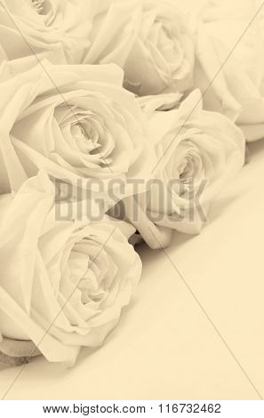 Beautiful White Roses Close-up As Wedding Background. Soft Focus. In Sepia Toned. Retro Style