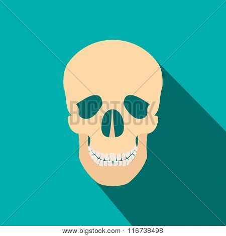 Human skull flat icon with shadow