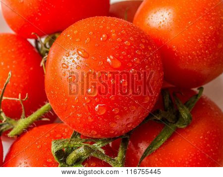 Tomatos in the garden