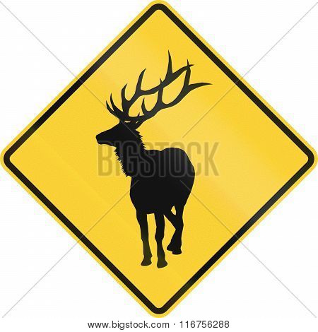United States Mutcd Road Sign - Warning Of Large Wild Animals Nearby (elk)