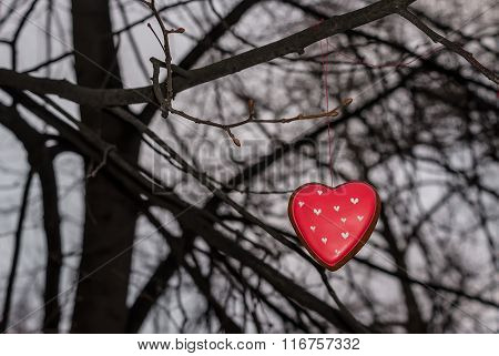 Red cookie heart shaped on the tree
