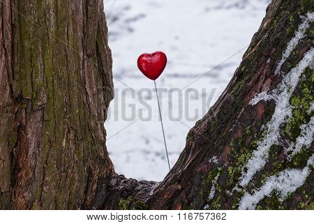 Red lollipop heart shaped on the tree