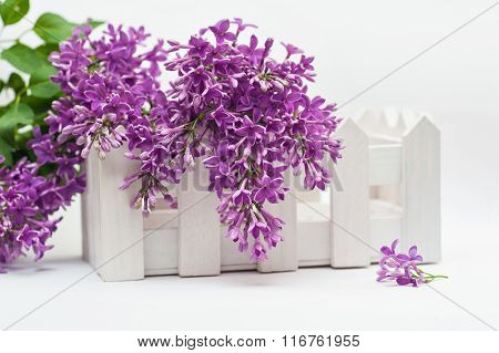 Beautiful Spring Lilac And A Small Fence On The White Background