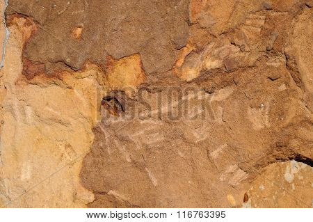 Surface Of The Marble With Brown Tint