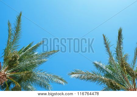 Palm Frond Against Blue Sky