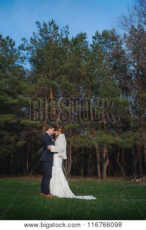 Groom Kisses The Bride On A Background Of Pine Forest